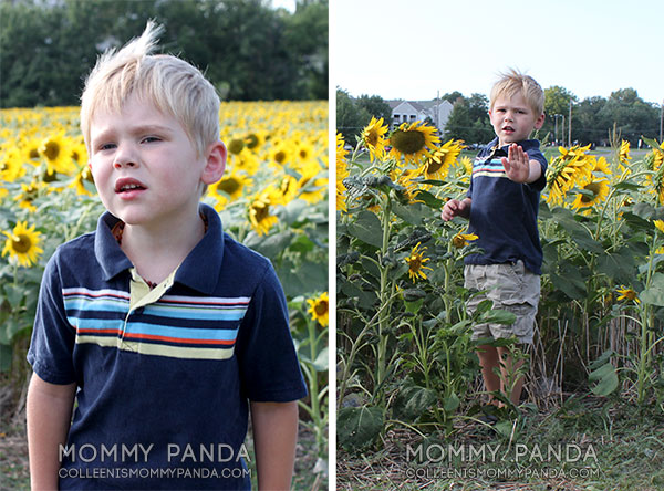 mommy-panda-blog-manhattan-ks-sunflowers2