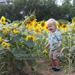 We Played in Sunflowers Today