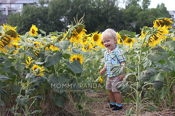 mommy-panda-blog-manhattan-ks-sunflowers3