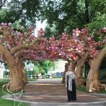 Missouri Botanical Garden Lantern Festival